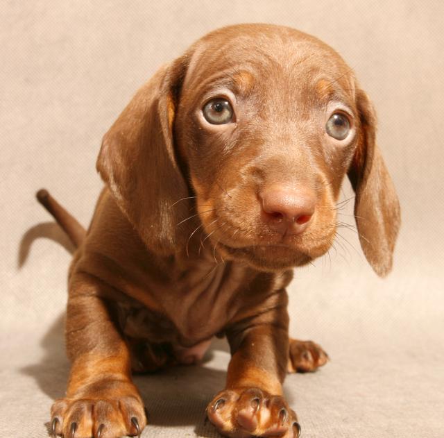 perro tierno cachorro Imagenes de perros tiernos cachorros