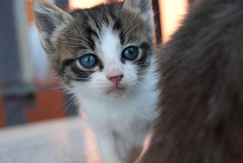 imagenes de gatos tiernos Imagenes de gatos tiernos