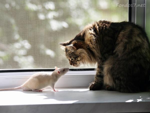 gato y raton amigos 1024x768 Imagenes de amistad de animales
