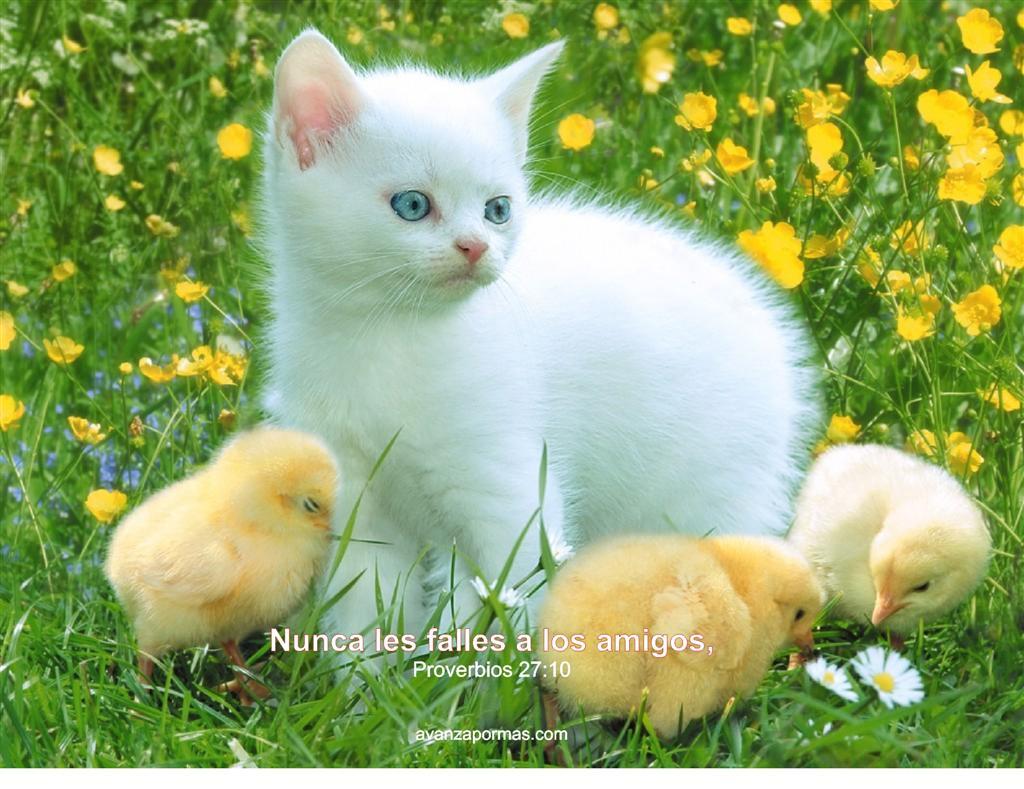 Imagenes de amistad de animales | Imagenes Tiernas - Imagenes de Amor