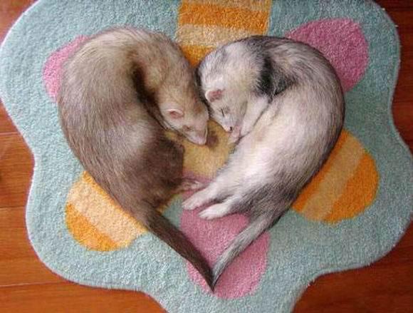 imagenes animalitos 23 Imágenes tiernas de amor