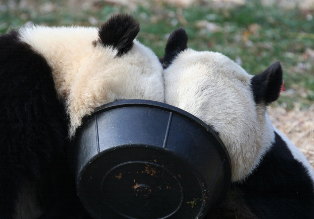 panda 1024x716 Imagenes de amistad de animales