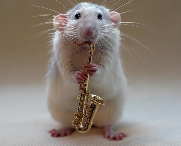 Imagen tierna de ratoncito imágenes tiernas de ratoncitos