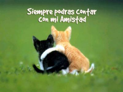 bonita imagen de amistad de gatitos , donde en la parte superior de