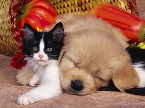 Imagenes tiernas de amistad Imagenes tiernas de gatitos