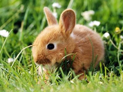 Imagenes tiernas de conejos