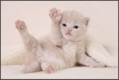 Imagenes tiernas de gatitos Imagenes tiernas de gatitos