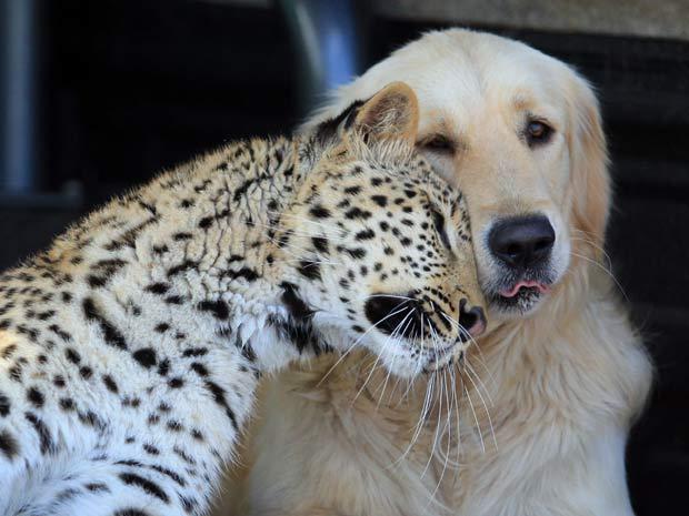 Imagen tierna de amistad