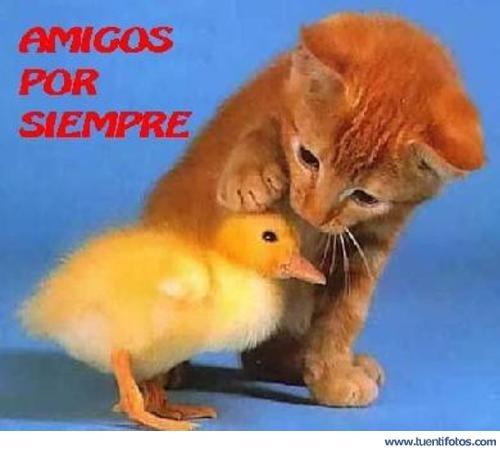 """Amigos Por Siempre imágenes tiernas """"amigos por siempre"""""""