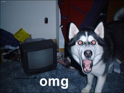 OMG husky e1339608681259 imágenes tiernas chistosas