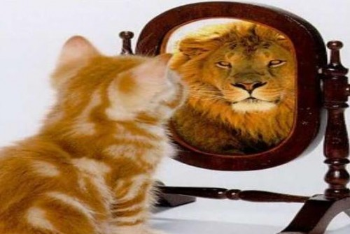 de gato a león e1339608217683 imágenes tiernas chistosas