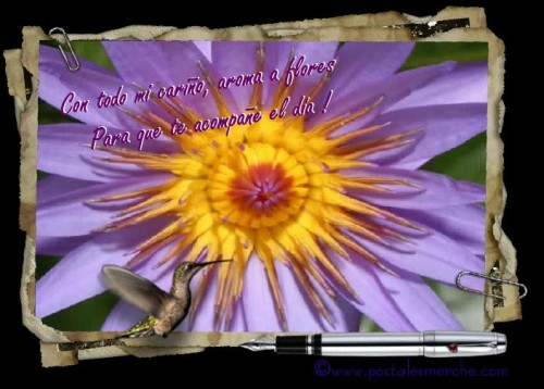 postal de flores e1339859508105 Imágenes tiernas con flores
