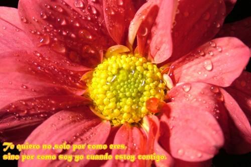 postales flores e1339859578624 Imágenes tiernas con flores