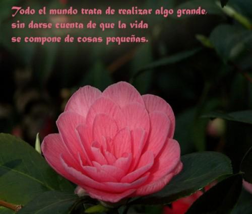 tarjetas flores y mensaje e1339859601935 Imágenes tiernas con flores