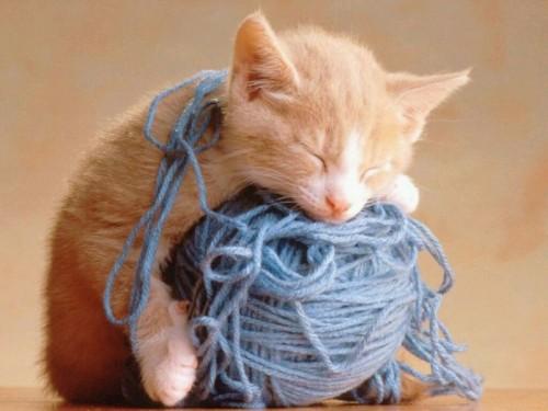 Gatito dormilon e1341253749573 Imágenes tiernas de gatitos y perritos con sueño