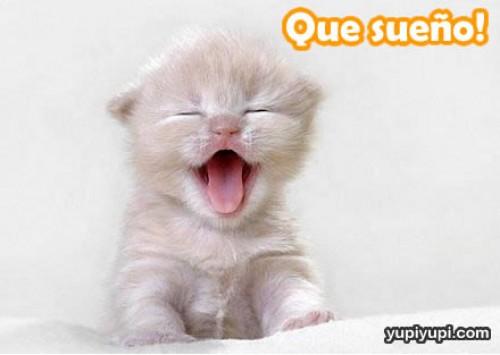 gatito-sueno