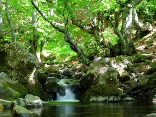 bosque e1345322626191 Imágenes lindas sobre paisajes de bosques encantados