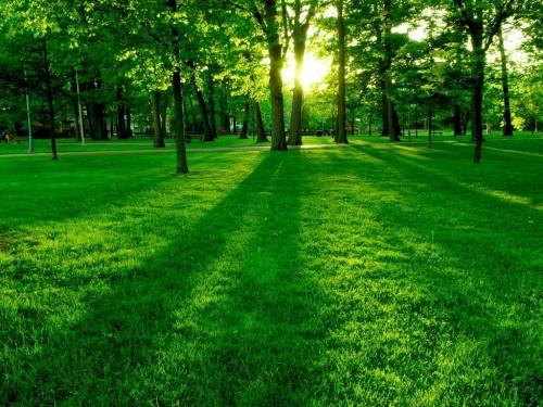 Amanecer en el bosque e1347200124950 Imágenes lindas de amaneceres