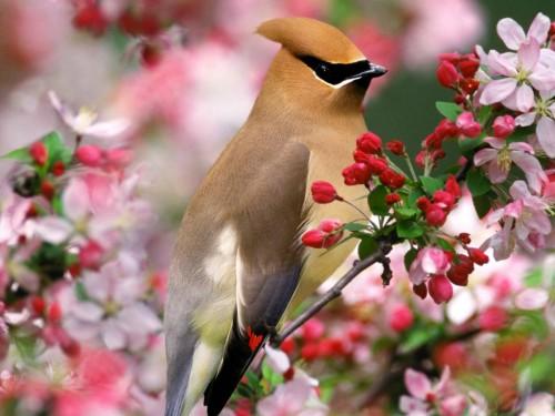Ave de primavera e1348155115433 Imágenes lindas de primavera