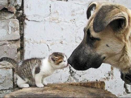 Imágenes de ternura animal (Imagenes para Facebook)