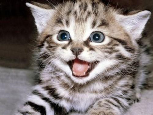 gatitosbebes1 e1346533319624 Imagenes tiernas de gatos bebes