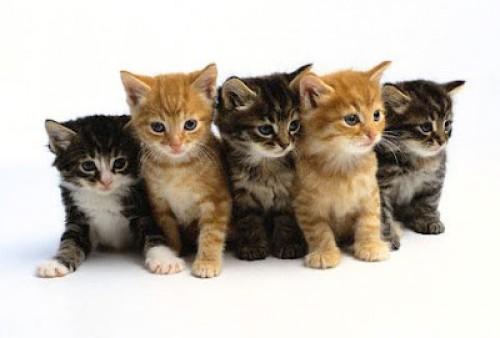 gatitosbebes2 e1346533428765 Imagenes tiernas de gatos bebes