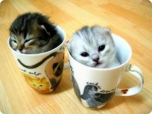 gatitosbebes3 e1346533459444 Imagenes tiernas de gatos bebes