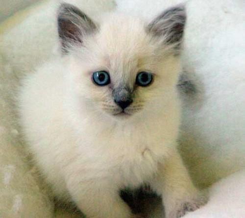 Imagenes tiernas de gatos bebes | Imagenes Tiernas - Imagenes de Amor