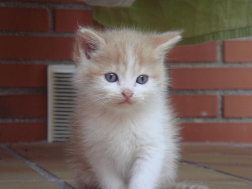 gatitosbebes5 Imagenes tiernas de gatos bebes