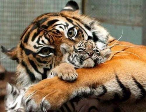 los animales e1346882246912 Imágenes de ternura animal