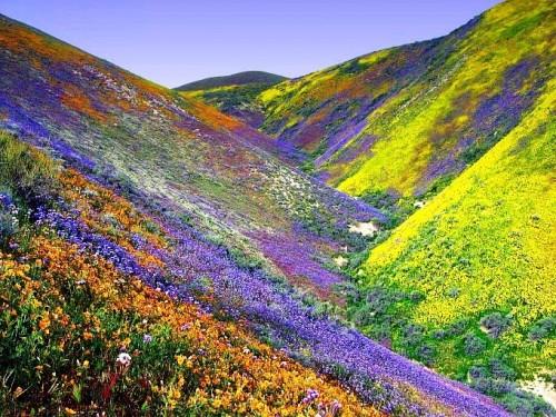 primavera  e1348155164831 Imágenes lindas de primavera