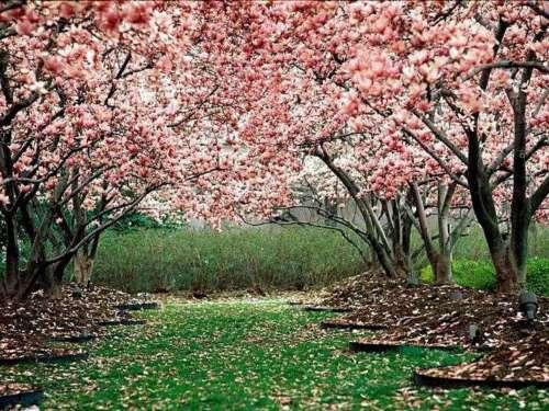primavera  Imágenes lindas de primavera