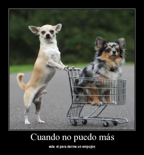 ... con frases de amistad1 Imágenes de animales con frases de amistad