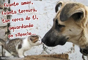 amor y animales3