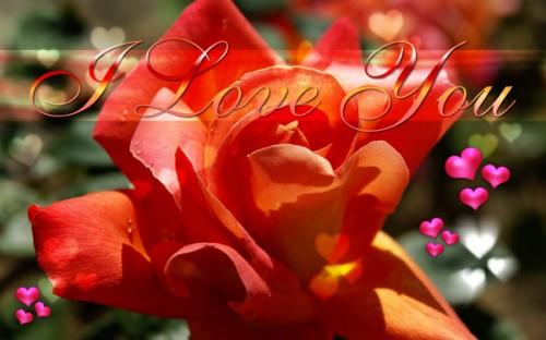 E cards e1352828291740 Postales románticas de flores