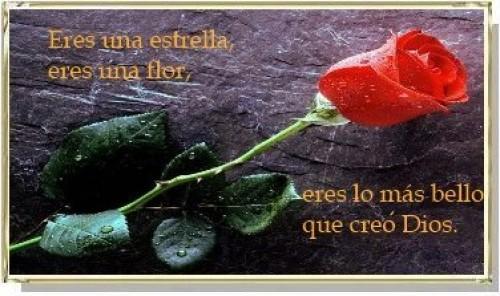 postales de amor con flores e1352828379586 Postales románticas de flores