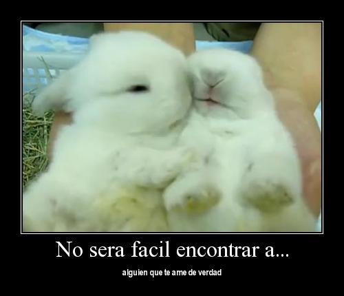 Im  Genes Con Frases De Amor 1 Im  Genes Lindas De Amor Animal