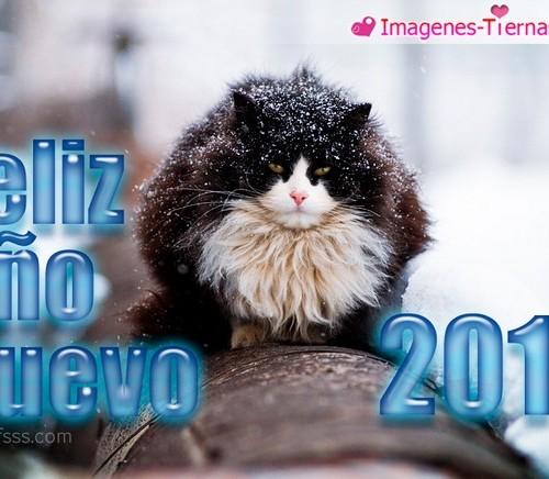 Las mejores imagenes de Feliz año nuevo 2013 27 500x436 Las mejores imagenes del Feliz año nuevo 2013 (80 imagenes)