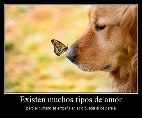 imagenes lindas de amor animal