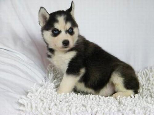 Fotos de perros | imagenes de perros | fotos de cachorros