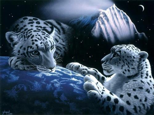 Tigres Sobre la Tierra e1357396825596 Imágenes lindas de tigres