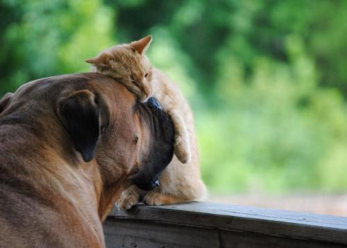 amigos para siempre Imágenes de amistad de perros y gatos