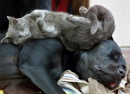 arx1220378130d Imágenes de amistad de perros y gatos