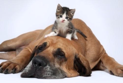 perro gato Imágenes de amistad de perros y gatos