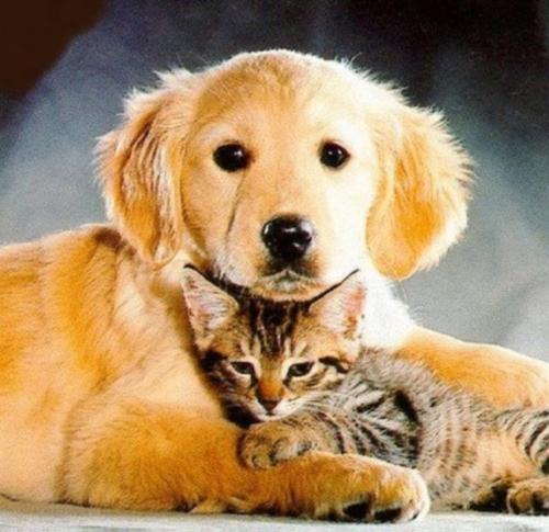 perros y gatos convivencia Imágenes de amistad de perros y gatos