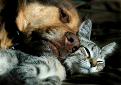 perros y gatos Imágenes de amistad de perros y gatos