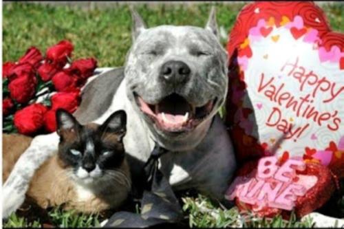 Valentines cat and dog Feliz San Valentín   Día de los enamorados   14 de Febrero