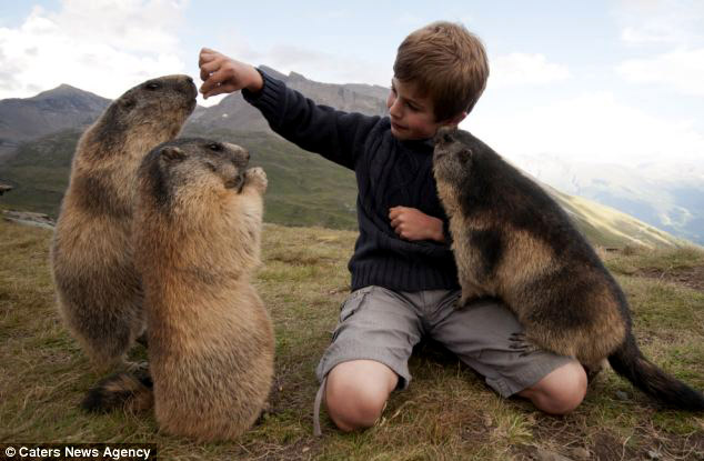 matteo marmotas Imágenes de amistad entre humanos y animales