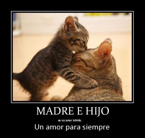 El Amor de Madre Es… | Imagenes de Frases [