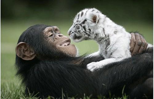 amistad animales Imagenes de Amistad entre Animales